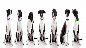 same-dog_various-collars-cover-photo-1940x1091