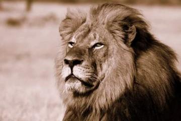 Cecil
